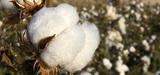 OGM : la France se met en conformité avec la législation européenne