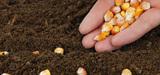 Clause de sauvegarde OGM : pro et anti-OGM affûtent leurs arguments