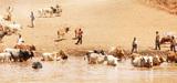 Sécheresse et famine en Afrique : prévenir la crise dans la région du Sahel
