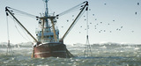 Politique commune des pêches : le Cese cible les aspects économique, environnemental et social