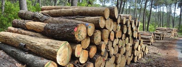 Gestion durable des forêts : les normes de certification PEFC durcies
