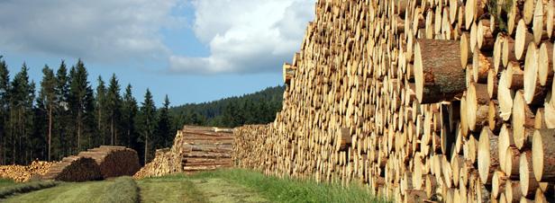 La France refond son code forestier