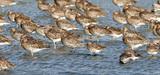 Deux espèces de la liste rouge de l'UICN deviennent chassables
