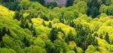 Massif central : des pistes pour renforcer la filière bois