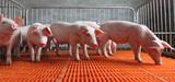 Des propositions pour simplifier les contrôles environnementaux des élevages