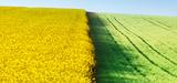 Agrocarburants de 1ère génération : le changement d'affection des sols affaiblit l'ACV