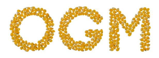 OGM : un projet de décret fixe à 0,1% le seuil de contamination imposant l'étiquetage des semences de maïs