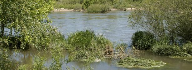 Crues : quelles contaminations des eaux de rivières en milieu agricole ?