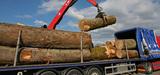 Bois-énergie : les paradoxes de la filière