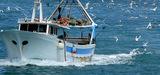 Réforme de la pêche : un premier accord des ministres européens
