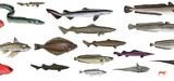 Premier pas vers une réduction de la pêche en eau profonde en Europe