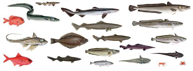 Le devon pour la pêche dans la péninsule de Kola