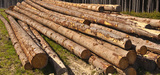 Biomasse : Delphine Batho évoque des pistes de réflexion