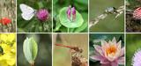 2013 sera-t-elle l'année de la biodiversité en France ?
