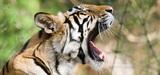 Conférence d'Hyderabad  sur la biodiversité : enjeux majeurs, perspectives limitées