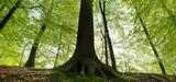 Valorisation de la forêt française : les pistes d'actions