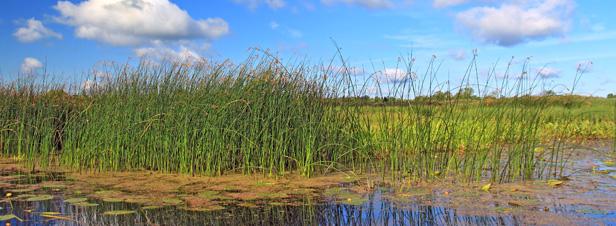 Zones humides : le cri d'alerte des spécialistes