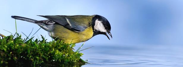 La Conférence d'Hyderabad double les financements de la biodiversité
