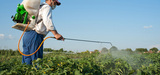 Un rapport du Sénat dénonce la sous-évaluation des risques liés aux pesticides