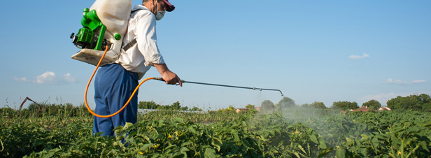 Un rapport du S�nat d�nonce la sous-�valuation des risques li�s aux pesticides