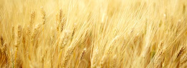 Agriculture biologique : 5,5% des surfaces agricoles utiles en 2015 ?