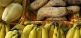 Exposition aux pesticides : les Antilles ne présentent pas de spécificité selon l'Anses
