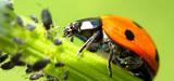 """L'agroécologie n'est pas une approche """"utopique"""" mais bien opérationnelle, selon le CGDD"""