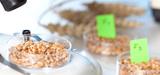 OGM : l'Efsa ne veut pas réévaluer les risques liés au NK 603