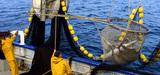 Réforme de la pêche : les eurodéputés votent l'interdiction progressive des rejets en mer à compter de 2014