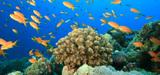 Le plan d'action pour le milieu marin mis en œuvre par trois arrêtés