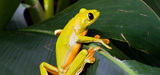 Biodiversité : l'IPBES se structure