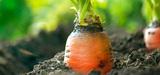 Les consommateurs Français toujours plus demandeurs de bio