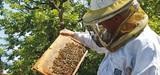 Vers une filière apicole durable en France