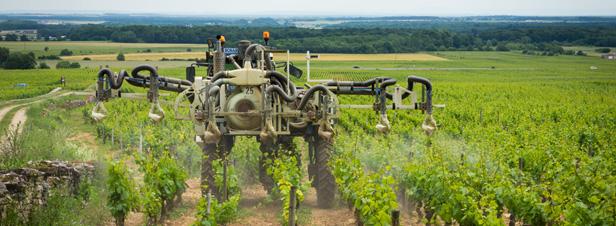 Pesticides : une enquête alerte sur l'exposition des salariés viticoles