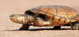 Grenelle : le ministère de l'Ecologie dresse son bilan 2012
