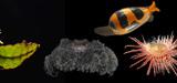 """Expédition naturaliste """"La Planète Revisitée"""" : un premier bilan de la campagne en Papouasie-Nouvelle-Guinée"""