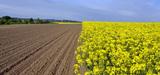 Agrocarburants : le CGDD se positionne sur le changement d'affectation des sols