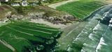 Pollution par nitrates : le juge enjoint aux préfets bretons de renforcer les quatrièmes programmes d'actions