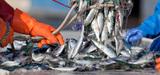 Nouvel accord sur la réforme de la politique commune de la pêche