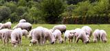 Réforme de la PAC : une politique agricole à la carte ?