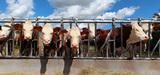 Elevage : les compléments alimentaires bons pour l'environnement auscultés par l'Efsa