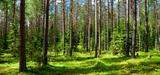 Liste rouge mondiale 2013, entre espèces menacées et espèces disparues, un tableau bien alarmant