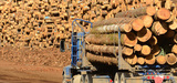 La filière bois-forêt doit participer au redressement productif