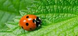 Pesticides : le plan Ecophyto booste la recherche