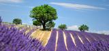 Chimie du végétal : le potentiel de la biomasse en France