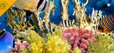 Conférence environnementale : la pêche et les pollutions marines seront abordées à la marge
