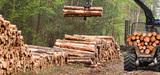 Nouvelle stratégie forestière européenne : pour une gestion équilibrée et durable