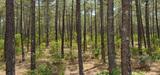 Agriculture et forêt : les zones de production en sursis ?