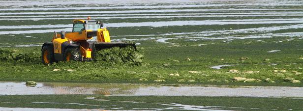 Le plan algues vertes est inefficace, selon des scientifiques