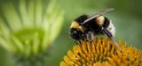 Le potentiel de pollinisation des territoires européens cartographié